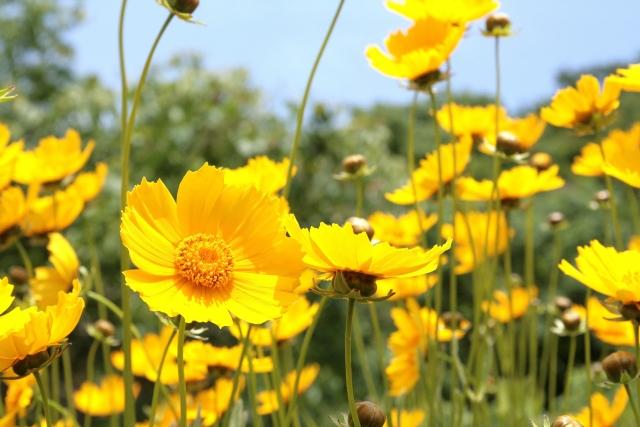 キク科アルニカの花から得たエキス。フラボノイド、カロチノイドなどの抗酸化成分や、タンニンの収れん作用、また抗炎症作用などを付与されます。