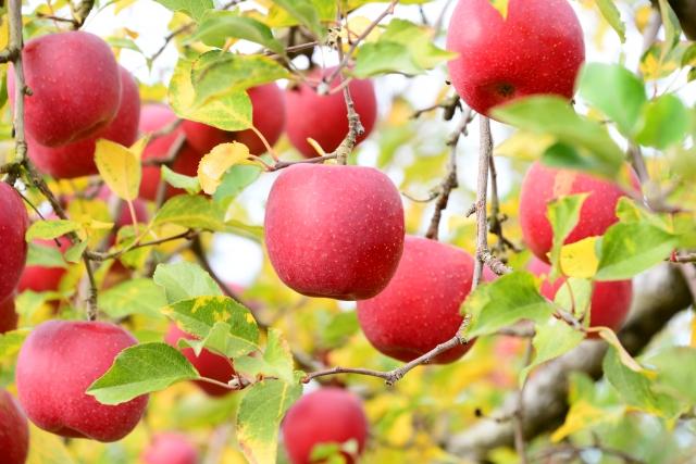 リンゴ酸は、天然ではリンゴなどの果実に多く含まれている有機酸のことです。ブドウ酸を還元する方法でも合成することができます。高配合で肌に刺激となることも。髪の表面を潤滑させたり、pHを整える効能も。