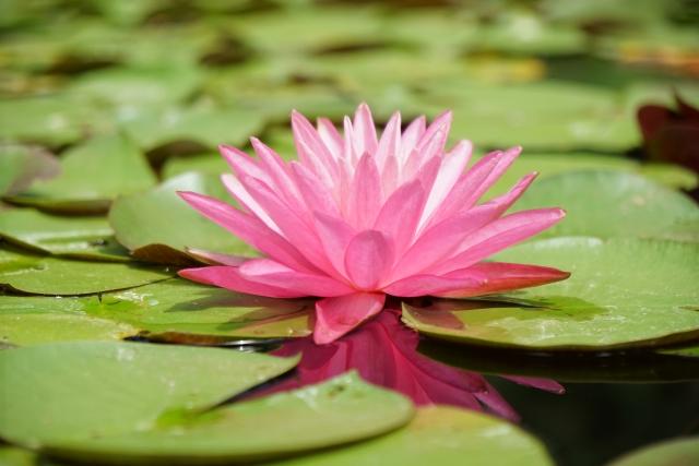 ・スイレンの花エキスであるニンファエアアルバエキスは優れた保湿作用を付与。