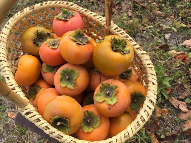 ・カキタンニンは柿渋に1%-2%程度含まれる成分で、高い収れん作用と加齢臭を分解して消す効果を付与。