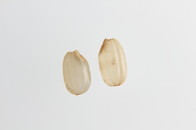 ポリフェノールの一種γ-オリザノールやリノール酸リッチなコメの胚芽オイルです。アンチエイジング、美白効果やリッチな感触が特徴 。
