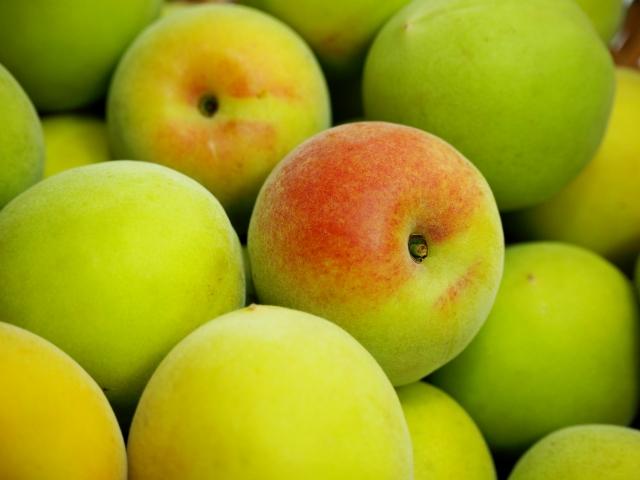 ・ウメ果実エキスはメイラード反応(肌の糖化)を抑制する働きがあり、肌の老化、くすみを抑制する効果を付与。